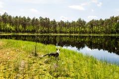 le riflessioni degli alberi nel lago innaffiano nel sole luminoso di mezzogiorno Immagine Stock