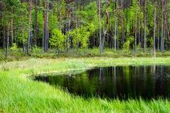 le riflessioni degli alberi nel lago innaffiano nel sole luminoso di mezzogiorno Immagini Stock