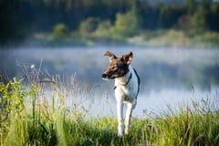 le riflessioni degli alberi nel lago innaffiano nel sole luminoso di mezzogiorno Fotografia Stock Libera da Diritti