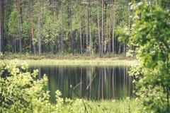 le riflessioni degli alberi nel lago innaffiano nel sole luminoso di mezzogiorno Fotografie Stock Libere da Diritti