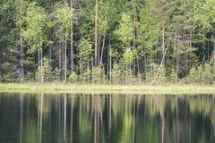 le riflessioni degli alberi nel lago innaffiano nel sole luminoso di mezzogiorno Fotografie Stock