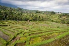 Le risaie di Jatiluwih. Fotografia Stock Libera da Diritti