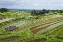 Le risaie di Jatiluwih. Fotografia Stock