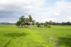 Le risaie, i cocchi, un gazebo per il riparo e le nuvole di pioggia sono formarsi, naturale, l'agricoltura Fotografia Stock