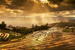 Le risaie su a terrazze in Tailandia del nord, inceppamento di Mae, Chiang m. Immagini Stock Libere da Diritti