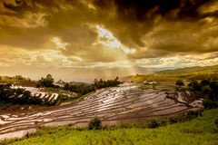 Le risaie su a terrazze in Tailandia del nord, inceppamento di Mae, Chiang m. Fotografie Stock