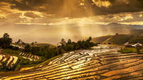 Le risaie su a terrazze in Tailandia del nord, inceppamento di Mae, Chiang m. Fotografia Stock Libera da Diritti