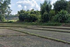 Le risaie vuote Fotografie Stock