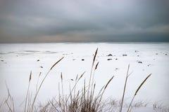 Le rivage congelé du Golfe de la plaine neigeuse et des roseaux secs sous un fond lourd de ciel photographie stock