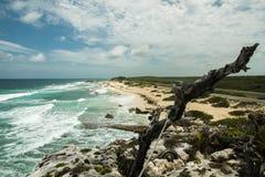 Le rivage de la mer avec des vagues Photo stock