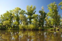 Le rivage du lac au printemps Photo libre de droits