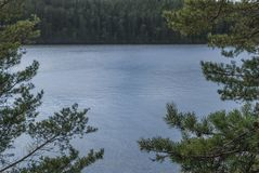 Le rivage du lac et des pins sur le rivage Image stock