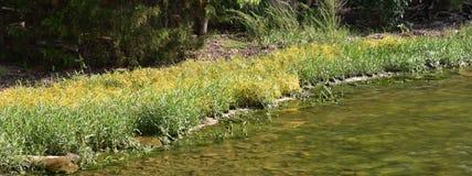 Le rivage herbeux rencontre l'eau à une crique chez Percy Priest Lake images libres de droits