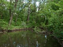 Le rivage vert d'une petite rivière Image stock