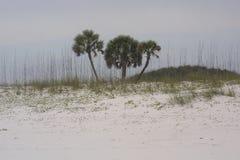 Le rive del golfo tirano 2019 in secco immagine stock