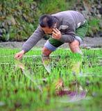 Le riz chinois plantant et parle par le téléphone portable, avril 2010. Photographie stock libre de droits