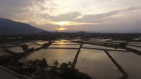 Le riz de levé aérien met en place au coucher du soleil en Asie banque de vidéos