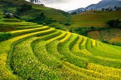 Le riz de terrasses met en place sur la montagne dans le nord-ouest du Vietnam Images stock