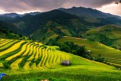 Le riz de terrasses met en place sur la montagne dans le nord-ouest du Vietnam Image libre de droits