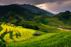 Le riz de terrasses met en place sur la montagne dans le nord-ouest du Vietnam Photographie stock libre de droits