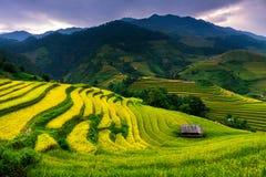 Le riz de terrasses met en place sur la montagne dans le nord-ouest du Vietnam Photos libres de droits