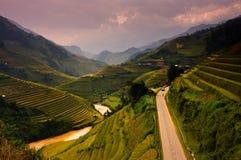 Le riz de terrasses met en place sur la montagne dans le nord-ouest du Vietnam Photo libre de droits