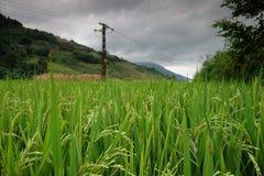 Le riz met en place dans la Chine du Nord, les contextes renversants d Y Photographie stock