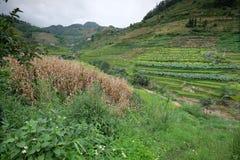 Le riz met en place dans la Chine du Nord, les contextes renversants d Y Photos stock