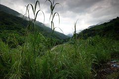 Le riz met en place dans la Chine du Nord, les contextes renversants d Y Photos libres de droits