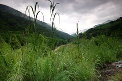 Le riz met en place dans la Chine du Nord, les contextes renversants d Y Photo stock