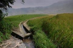 Le riz met en place dans la Chine du Nord, les contextes renversants d Y Images stock
