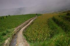 Le riz met en place dans la Chine du Nord, les contextes renversants d Y Image libre de droits