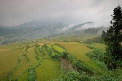 Le riz met en place dans la Chine du Nord, les contextes renversants d Y Image stock