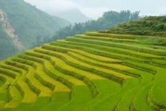Le riz met en place dans la région de montagne de Sapa, Vietnam image stock