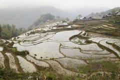 Le riz met en place des montagnes Images libres de droits