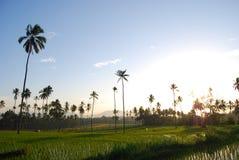 Le riz met en place Kotamobagu photos libres de droits