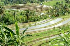 Le riz met en place la vue Image libre de droits