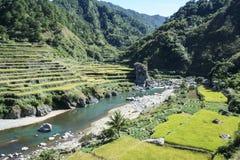 Le riz met en place luzon nordique les Philippines images stock