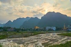 Le riz met en place près du coucher du soleil avec des montagnes à l'arrière-plan en parc national de coup de Phong Nha KE, Vietn Photos stock