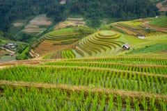 Le riz met en place sur en terrasse dans la saison rainny à la MU Cang Chai, Yen Bai, Vietnam Images stock