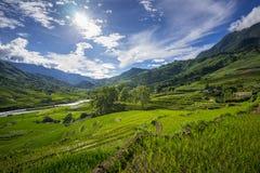 Le riz met en place sur en terrasse dans la saison rainny à SAPA, Lao Cai, Vietnam Photos stock