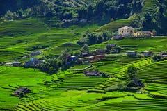 Le riz met en place sur en terrasse dans la saison rainny à SAPA, Lao Cai, Vietnam Photos libres de droits