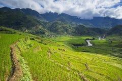 Le riz met en place sur en terrasse dans la saison rainny à SAPA, Lao Cai, Vietnam Images libres de droits