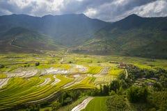 Le riz met en place sur en terrasse dans la saison rainny au TU Le village, Yen Bai, Vietnam Image stock