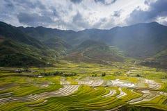 Le riz met en place sur en terrasse dans la saison rainny au TU Le village, Yen Bai, Vietnam Photographie stock libre de droits
