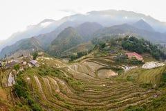 Le riz met en place sur en terrasse de Cat Cat Village, Vietnam Photographie stock