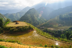 Le riz met en place sur en terrasse de Cat Cat Village, Vietnam Photographie stock libre de droits