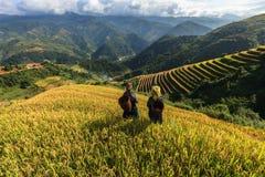 Le riz met en place sur en terrasse de la MU Cang Chai, YenBai, Vietnam Photos stock