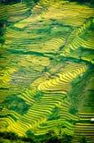 Le riz met en place sur en terrasse de la MU Cang Chai, YenBai, Vietnam Photographie stock