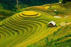 Le riz met en place sur en terrasse de la MU Cang Chai, YenBai, Vietnam Photo libre de droits